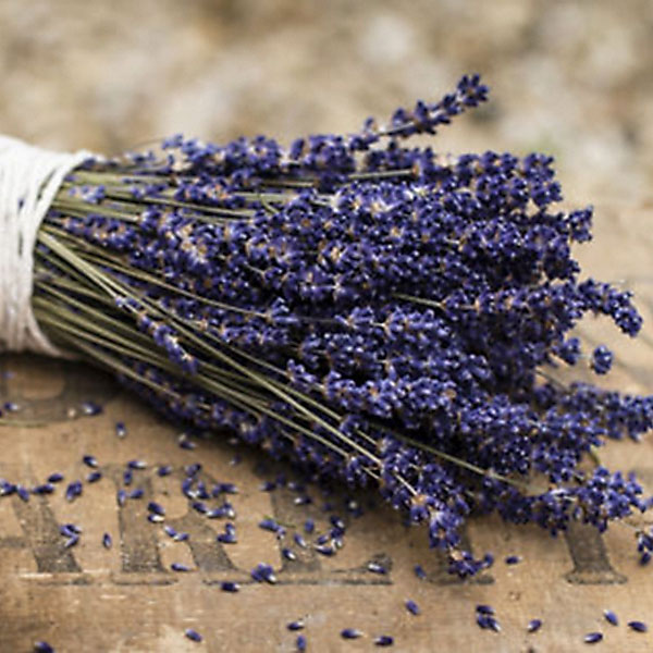 fragrant lavender bunch